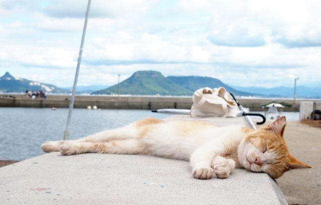 よく寝る猫